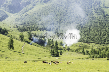 landscape with cows and wild fire