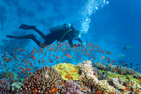 fisk undersoisk wildlife reef dykker underwater