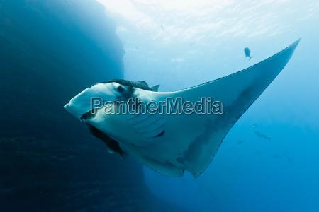 dyr fisk undersoisk lysstrale wildlife beam