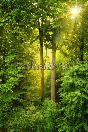 golden sun shines through trees