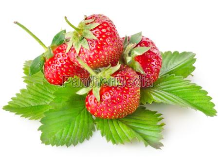 mad levnedsmiddel naeringsmiddel fodevare fritlagt gron