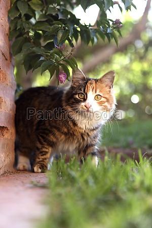 farverig indenlandsk kat