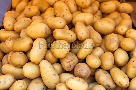 mad levnedsmiddel naeringsmiddel fodevare moden gronsager