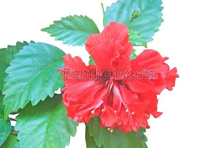 sundhed blomst plante vaekst blomstre blomstrende