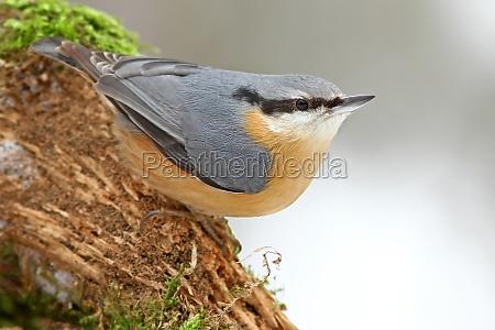 vinter dyr fugl fugle