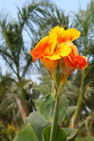 blomst, plante, vækst, blomstre, blomstrende, blomsterpragt - 10820610