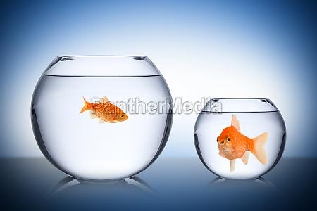 fisk social misundelse koncept