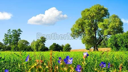 idyllic meadow landscape with blue skies
