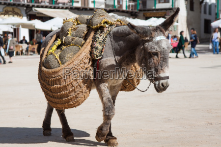 donkey carrying a sunflower in chinchon