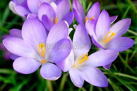 have blomst blomster plant plante forar
