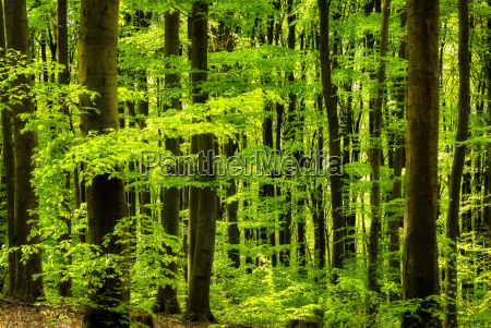 fresh greenery in the deciduous forest