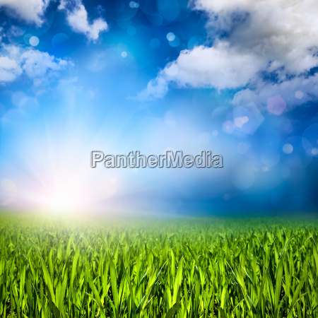grass sun clouds and light effects