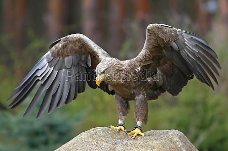 dyr fugl fugle rovfugl eagle