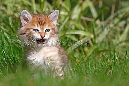 katte baby