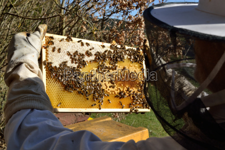 bier bistade bikuber biavleren biavler