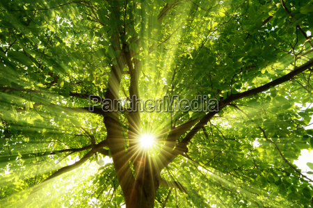sun shines explosively through the tree