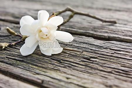 tavle trae brun blomstre blomstrende blomsterpragt