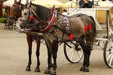 cracovia polonia carruajes tirados por caballos