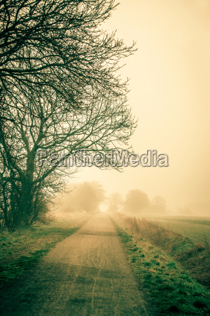 misty road an early morning