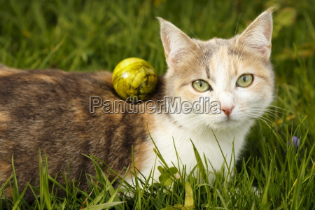 cat with egg