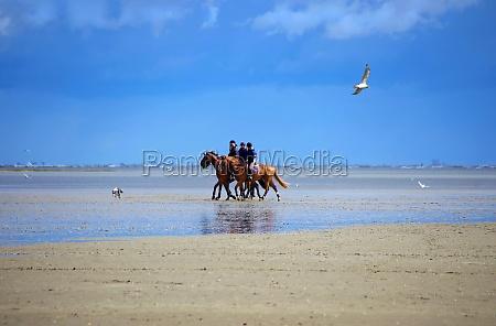 hest strand seaside stranden kysten vand