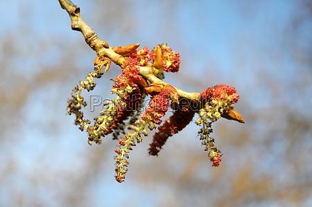 trae stov blomster gren kvist saed