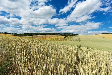 landskab landbrug