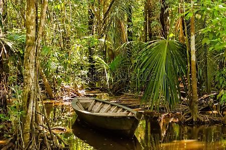 robad i junglen