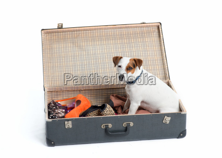 suitcase with dog