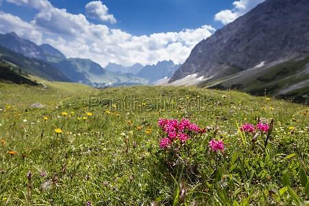 bjerg blomst eng