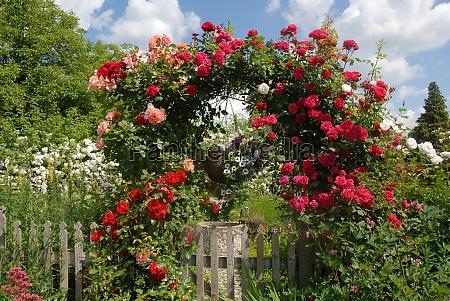 rose arc