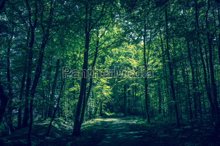 forest clearing with sunshine