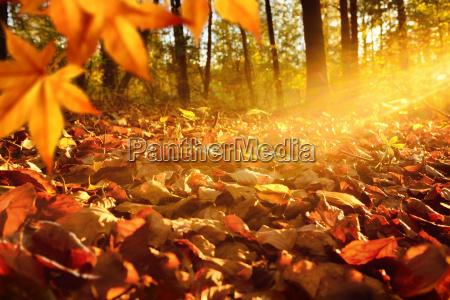 straler af lys pa skov gulvet