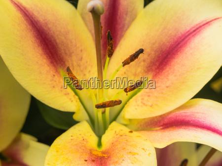 blomst fuld skaerm orkide tulipan amaryllis