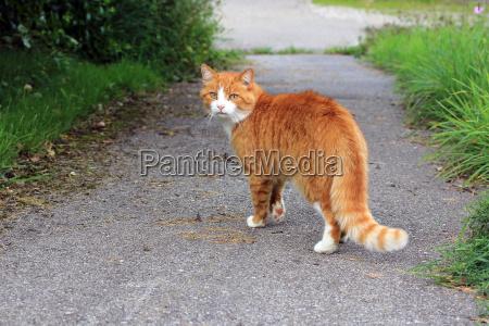 den rode kat pa gaden