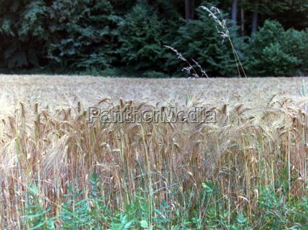 mad levnedsmiddel naeringsmiddel fodevare landbrug agerbrug