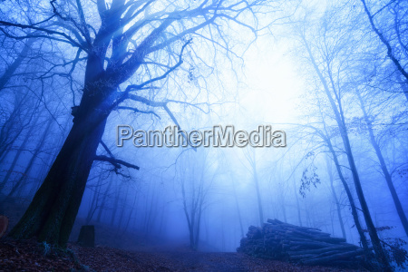 cool mood in the foggy forest