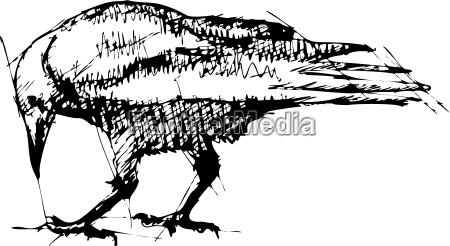 crows vektor pen tegning