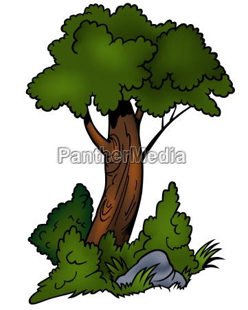 deciduous tree colored cartoon illustration