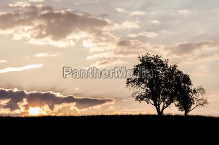 landlig trae traeer horisont traestamme stamme
