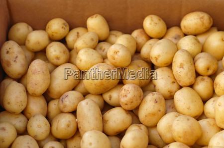 moden gronsager ra kartoffel bundt produkt