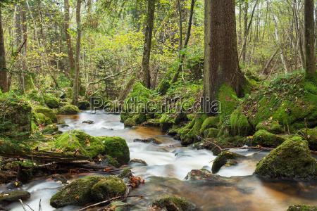 vandfald i skoven