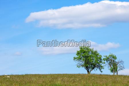 bla korridor landlig trae horisont gron