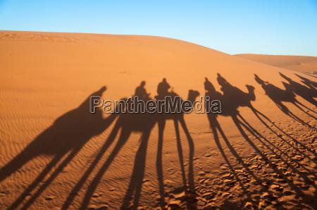 caravan with tourists in the sahara