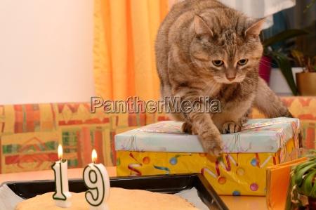 party celebration presents birthday party birthday