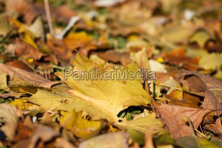 city park in autumn getafe madrid