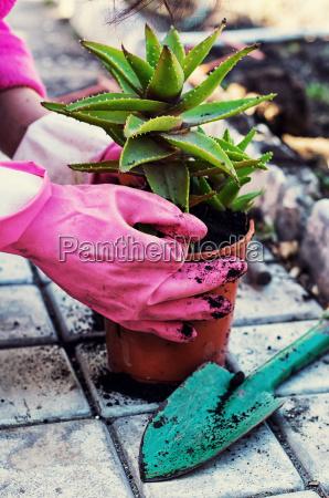 hus bygning blomst plante vaekst flora