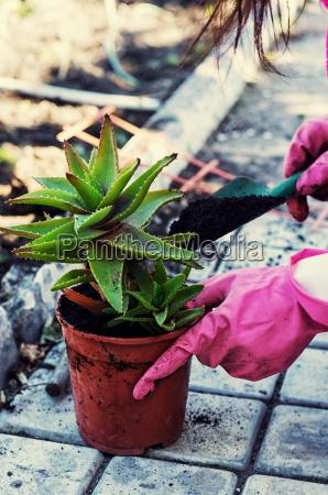 hospice dekorative potteplante