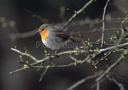 have fugl fauna oje organ fugle