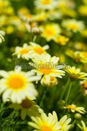 blomst plante vaekst gron gront gronne